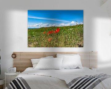 rode maïspapaver en weidebloemen, Groß Zicker, Rügen van GH Foto & Artdesign