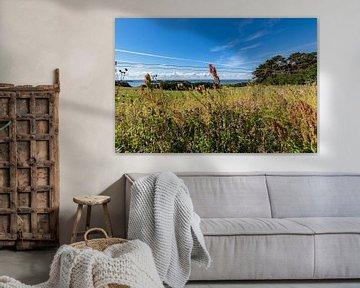 Nahaufnahme, Groß Zicker, Blick zum Klein Zicker, den Zicker See und die Ostsee, Rügen von GH Foto & Artdesign