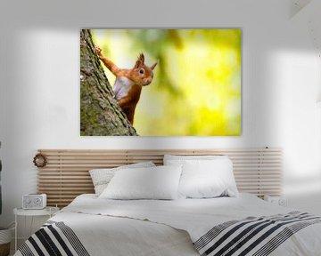 Eekhoorn komt eens piepen van Sam Mannaerts
