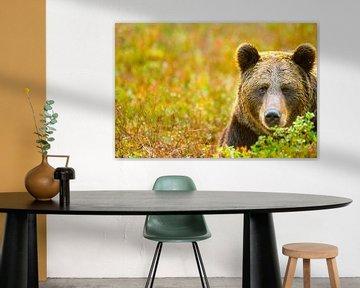 Porträt eines Braunbären von Sam Mannaerts