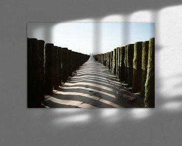 Lines van Marianne Bal