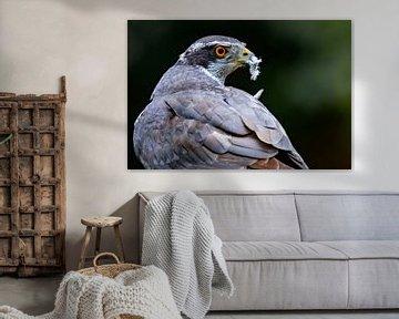 Falke von Sam Mannaerts