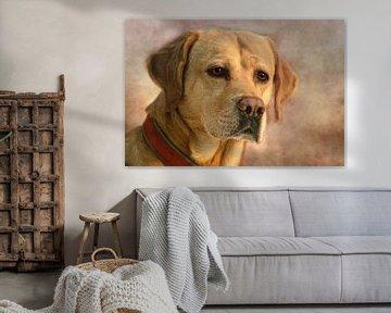 Labrador van Claudia Moeckel