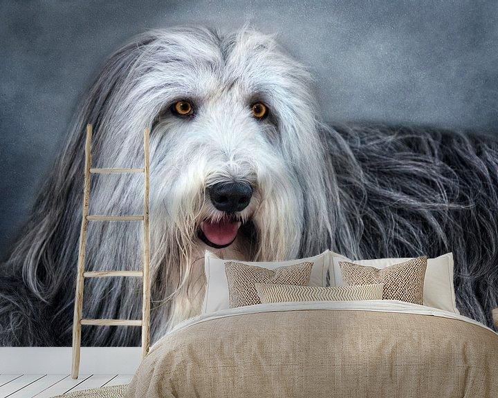 Beispiel fototapete: Bearded Collie von Claudia Moeckel