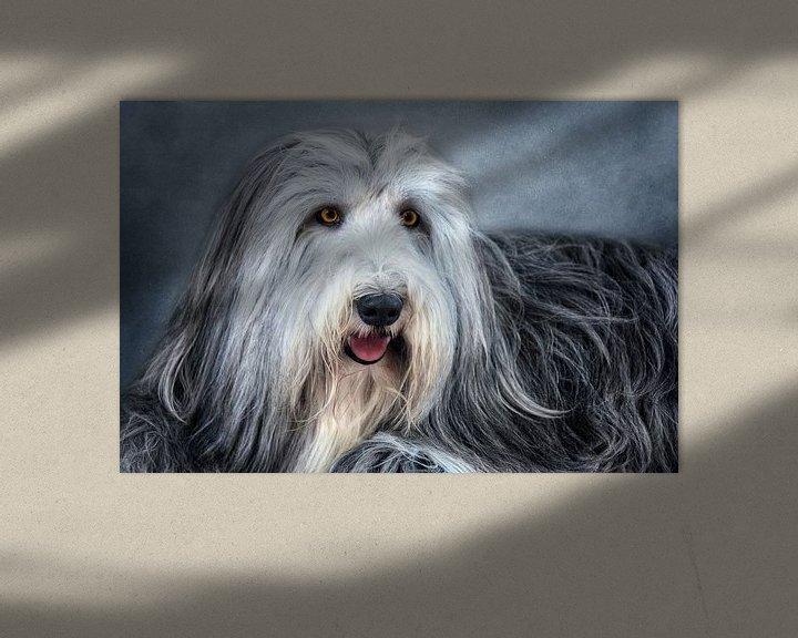 Beispiel: Bearded Collie von Claudia Moeckel