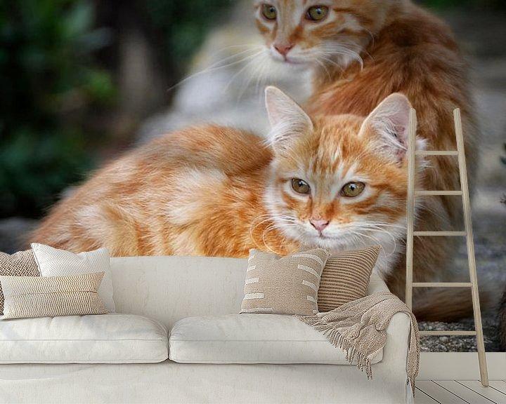 Beispiel fototapete: Katzen in Sardinien von Claudia Moeckel
