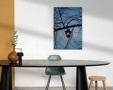 Lantaarn in de boom van Robin van Steen