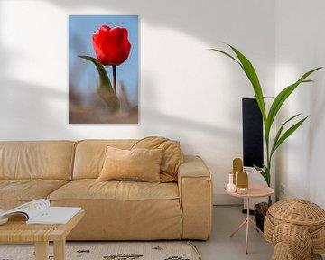 Tulpe von Marianne Henstra