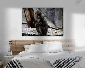 Mandril-Affe wildlebend von Evelien van der Horst
