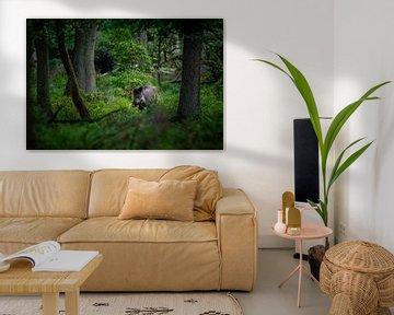 Wildschwein im Wald von Sam Mannaerts