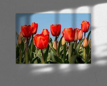 Tulipfield von Marianne Henstra