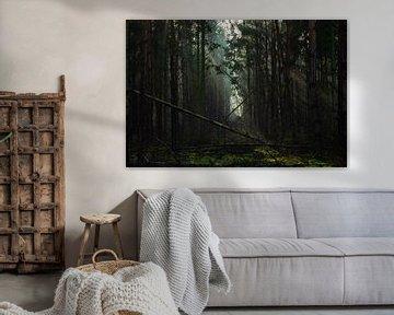 Mysteriöse Landschaft im Wald mit umgestürzten Bäumen von Discover Dutch Nature