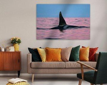 Kleurmagie en een prachtige orka fin van Koen Hoekemeijer