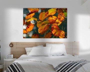Currantly... (Herfstbladeren in warmte tinten) van Caroline Lichthart