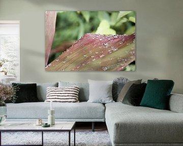 Regentropfen auf einer tropischen Pflanze von Henrike Schenk
