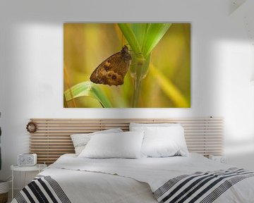 Vlinder van Ad van Kruysdijk