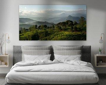Panorama Theeplantage Java, Indonesië