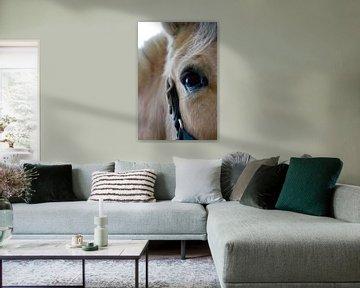 Die Seele eines Pferdes von Studio Voorpret