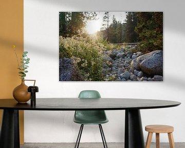 Sunset in Sequoia National Park van Studio Voorpret