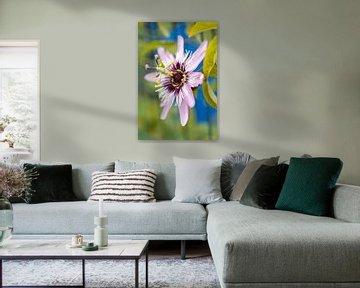 Rosa Passionsblume von Tot Kijk Fotografie: natuur aan de muur