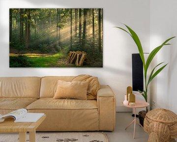 Houtstapel in het bos, Zwarte Woud van Guido de Kleijn