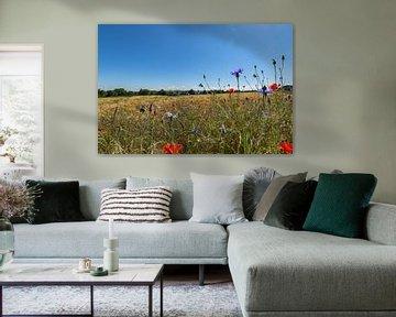 roter Klatschmohn und Kornblumen in Middelhagen auf Rügen von GH Foto & Artdesign