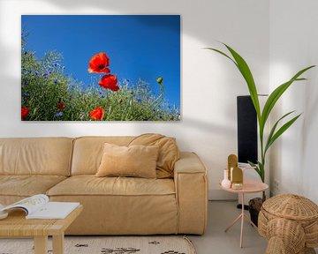 roter Klatschmohn im Gerstenfeld von GH Foto & Artdesign