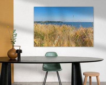 Gerstenfeld am Reddevitzer Höft, Blick zum Groß Zicker von GH Foto & Artdesign