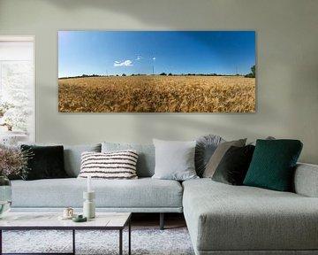 Panorama, Gerstenfeld am Reddevitzer Höft von GH Foto & Artdesign
