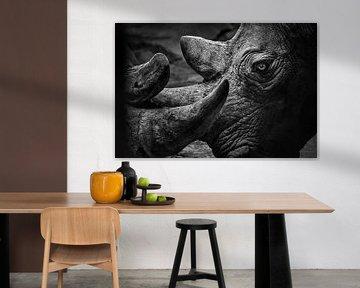 Zwei Nashörner in Nahaufnahme von Chihong