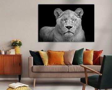 Löwin in Meditation von Chihong