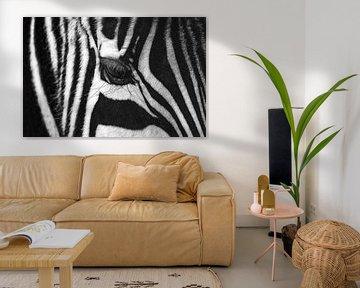 Nahaufnahme eines Zebras von Chihong