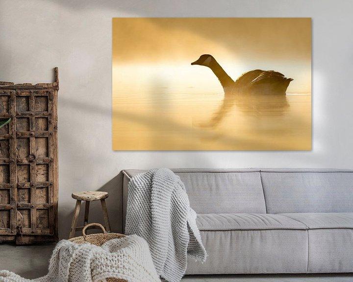 Sfeerimpressie: Canadese gans in tegenlicht van Sam Mannaerts Natuurfotografie