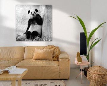 Pandabär winkt mit Hand von Chihong
