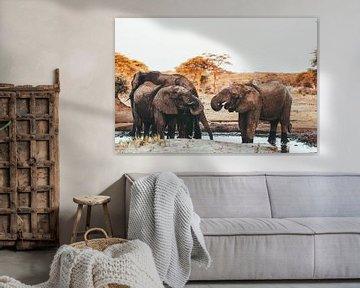 Eléphants à la mare    Botswana, Parc national de Chobe sur Suzanne Spijkers