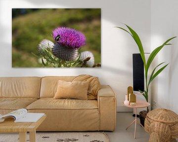 Biene auf Blume von Nina Haverkamp