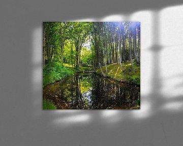 Forêt de hêtres sur la haute rive près de Lietzow sur GH Foto & Artdesign