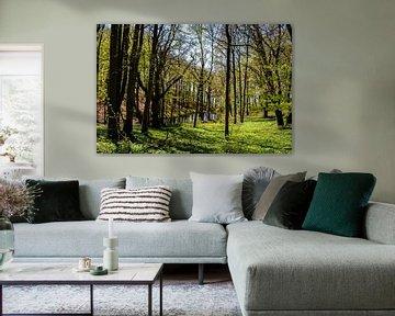 Le printemps au Grand Jasmund Bodden sur GH Foto & Artdesign