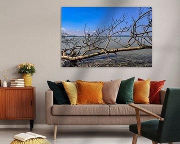 Tronc d'arbre sur le rivage - Großer Jasmunder Bodden près de Lietzow sur GH Foto & Artdesign