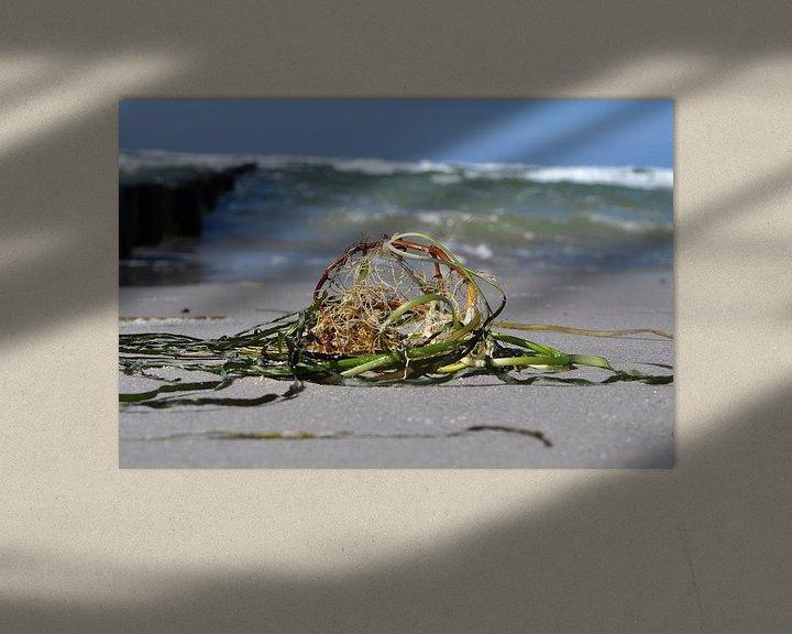 Beispiel: Strandgut auf Hiddensee von GH Foto & Artdesign
