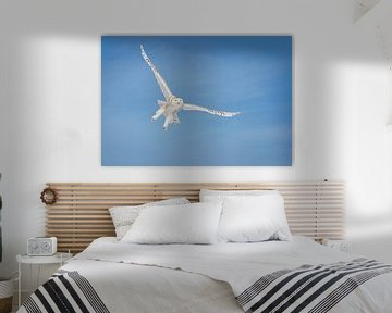 LP 71199697 Sneeuw uil vliegend in de blauwe lucht van BeeldigBeeld Food & Lifestyle