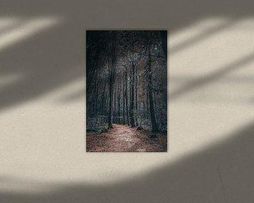 Launischer Wald von Kelly Sabrina