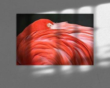 LP 70482306 Flamingo die met zijn kop op zijn rug rust van BeeldigBeeld Food & Lifestyle