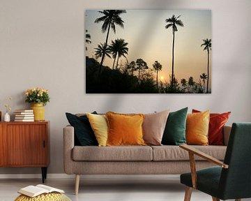 Palmen und Urwald im Sonnenuntergang, Koh Chang, Thailand