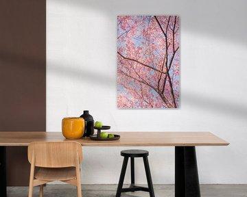 Bomen met kersenbloesems van Mickéle Godderis