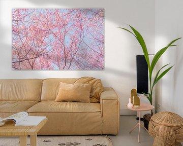 Bomen met roze kersenbloesems van Mickéle Godderis