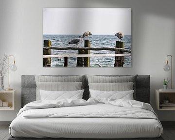 2 Möwen auf Buhnen in Vitt von GH Foto & Artdesign