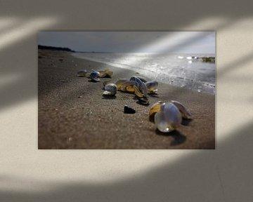 Plage de la mer Baltique sur Thomas Jäger