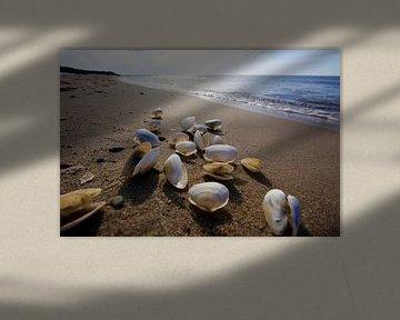 Oostzee met schelpen van Thomas Jäger