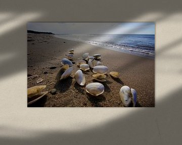 La mer Baltique avec des coquillages sur Thomas Jäger